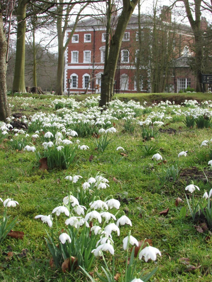 Snowdrop Season at Lytham Hall