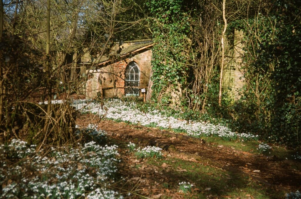 Flowers surround the privy! Snowdrop season at Lytham Hall